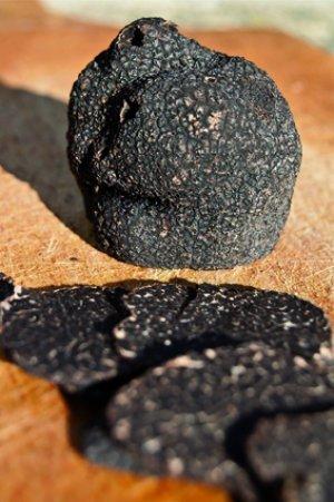 Tout savoir sur la truffe noire du Périgord pour Noël