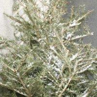 Recycler un sapin de Noël