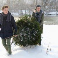 Comment couper un sapin pour Noël ?