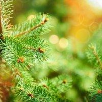 Comment conserver son sapin de Noël ?